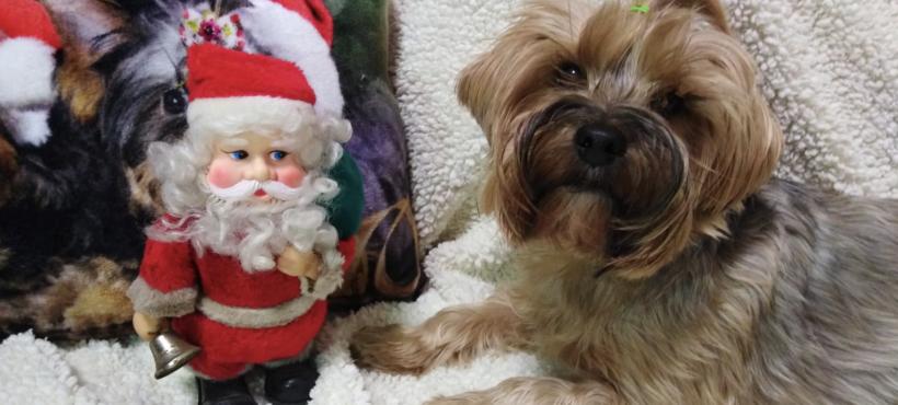 Il Natale con i nostri amici a quattro zampe